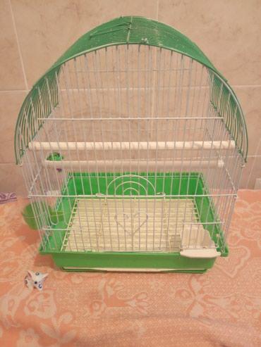 Клетка в Бишкек