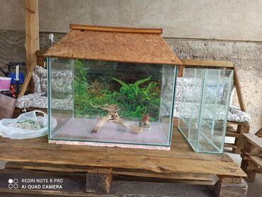 Pumpa za vodu - Srbija: AkvarijumNa prodaju akvarijum dimenzije 60cm duzina, 40cm sirina i