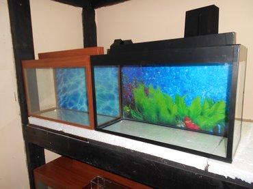 Bakı şəhərində teze akvariumlar uzunu 50 sm hundurluyu 35sm qapaqla ,eni 20 sm