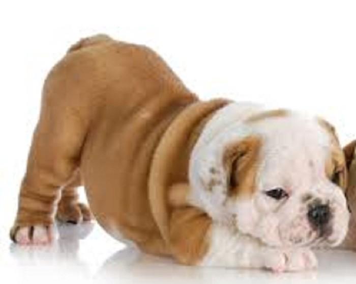 Για σκύλους σε Χλόη