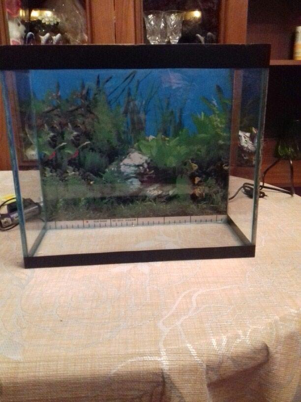 Akvarium.aksesurlari ile bir yerde. eni 15sm.uzunu 35sm. hundr 30sm. Photo 0