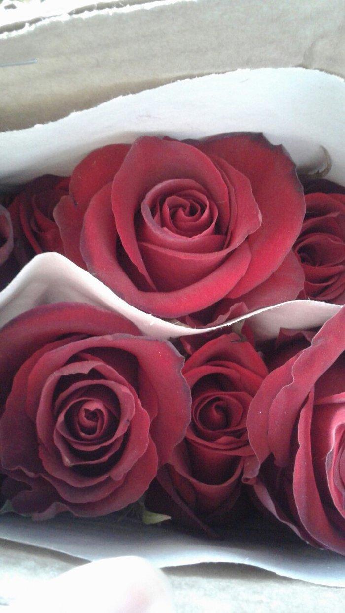 Поступление свежих роз!!!!!!! в Бишкек