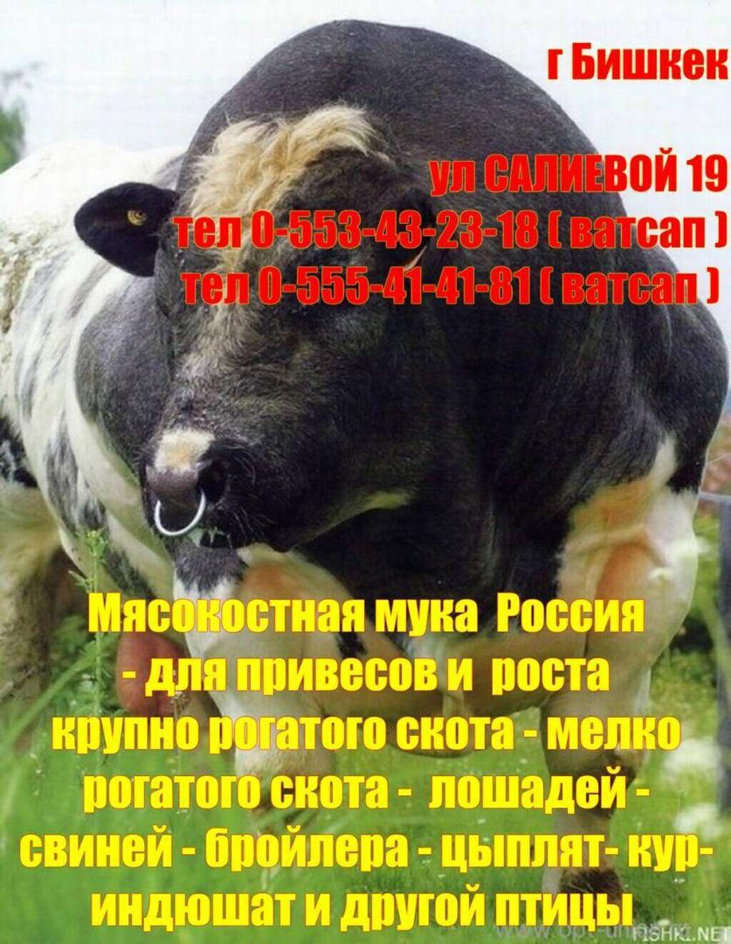 Мясокостная Мука Россия -- для привесов роста крс мрс лошадей свиней: Мясокостная Мука Россия  -- для привесов роста крс мрс лошадей свиней