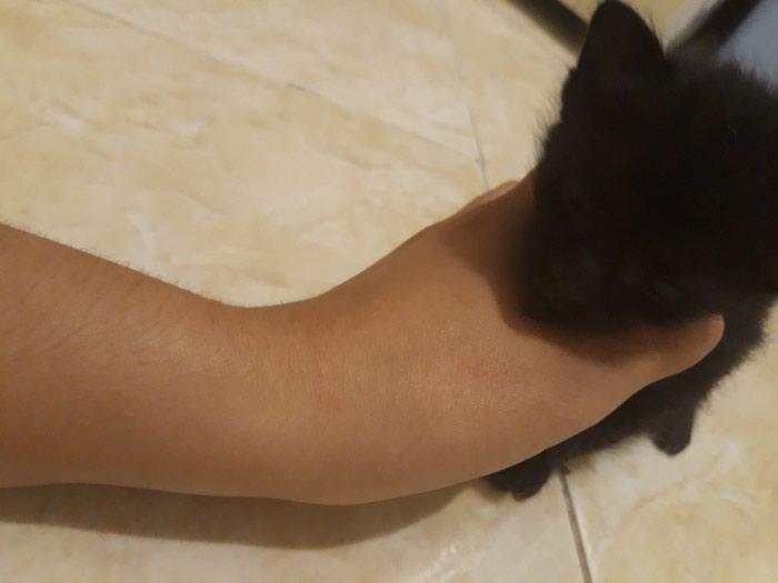 Коты. Photo 1