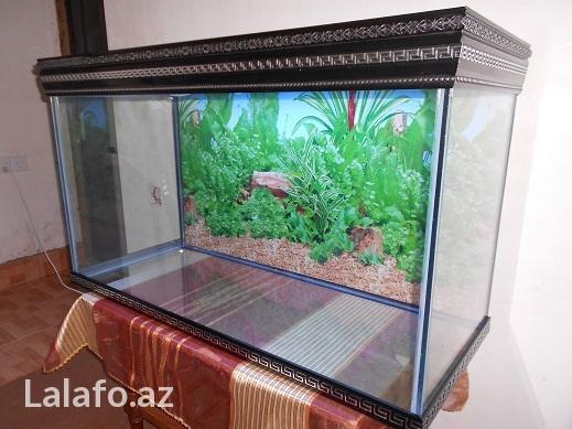 Versage akvariumlarina sifariw qebul olunur) . Photo 2