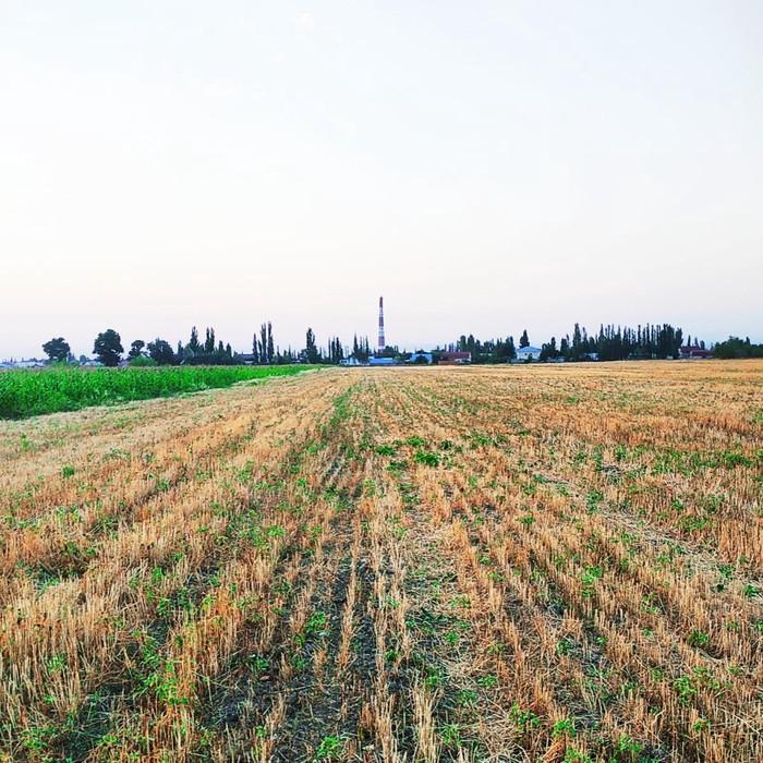 Продажа соток Для сельского хозяйства от собственника. Photo 0