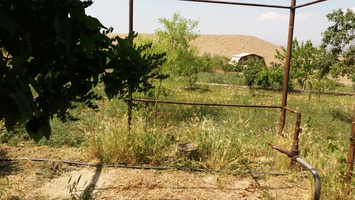 Дачный участок 20 соток земли. Photo 2