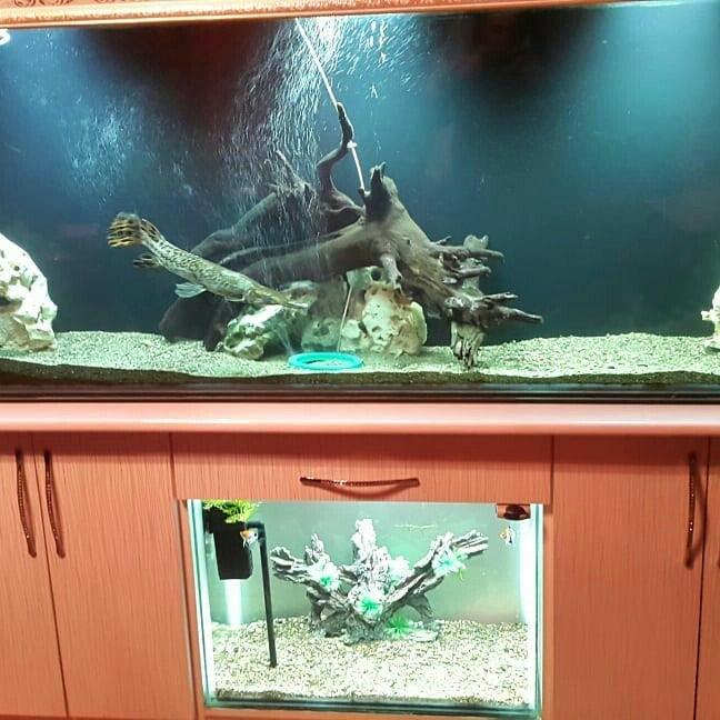 700 litir altinda da 1 akvarium tecili. Photo 1