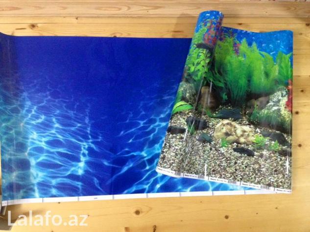 Akvarium ucun arxa fon lar . Photo 3