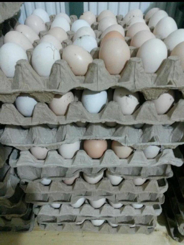 Temiz heyet yumurtasi oz saxladigim toyuglarimin yumurtasidi 20 qepikdi unvan insaatcilar metrosu