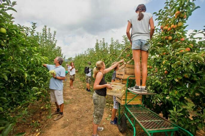 HITNO! Posao branje voća Nemačka- potrebni radnici za branje - Novi Sad