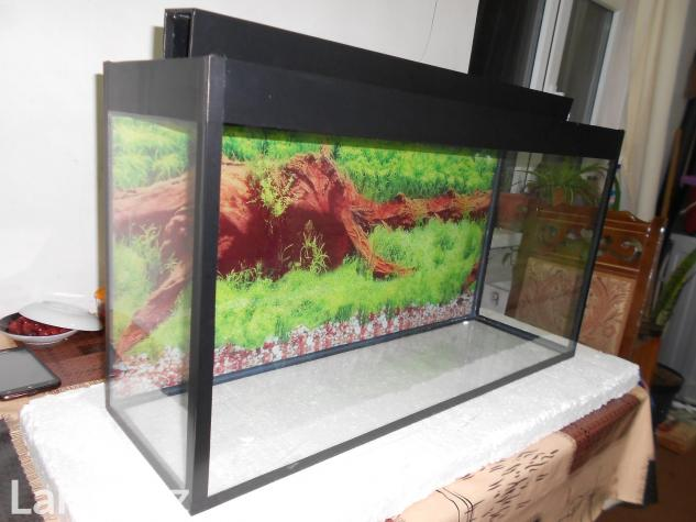 Akvarium qara ve mebel rengde . Photo 0