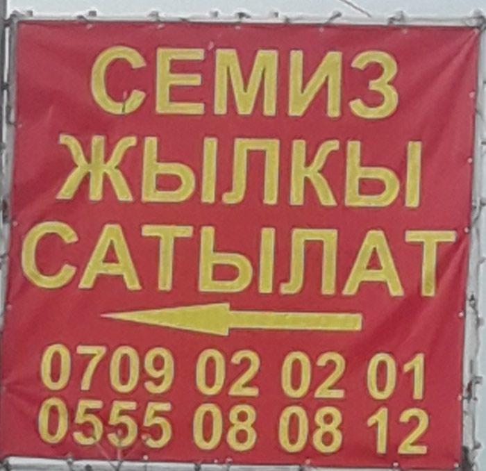 Семиз жылкы сатылат  союп бышырып беребиз  в Бишкек