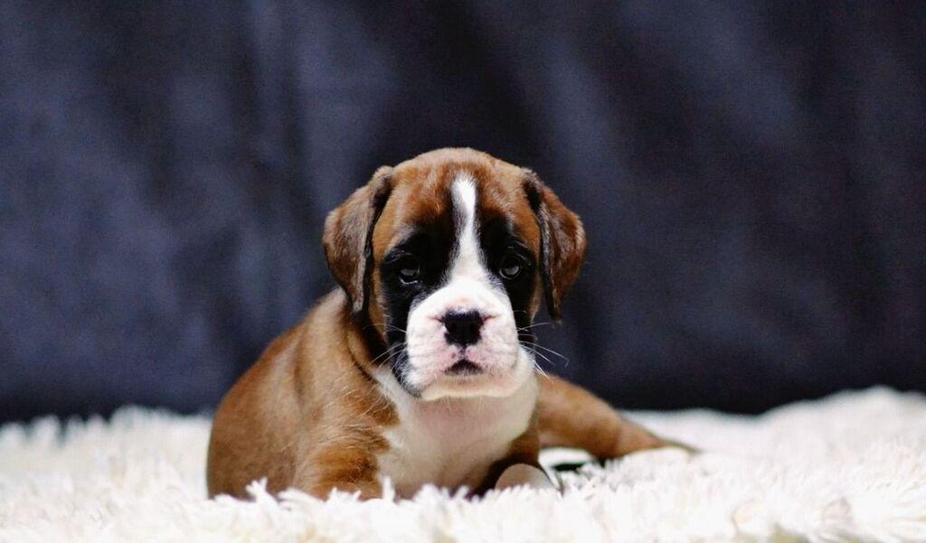Για σκύλους - Ημαθία: