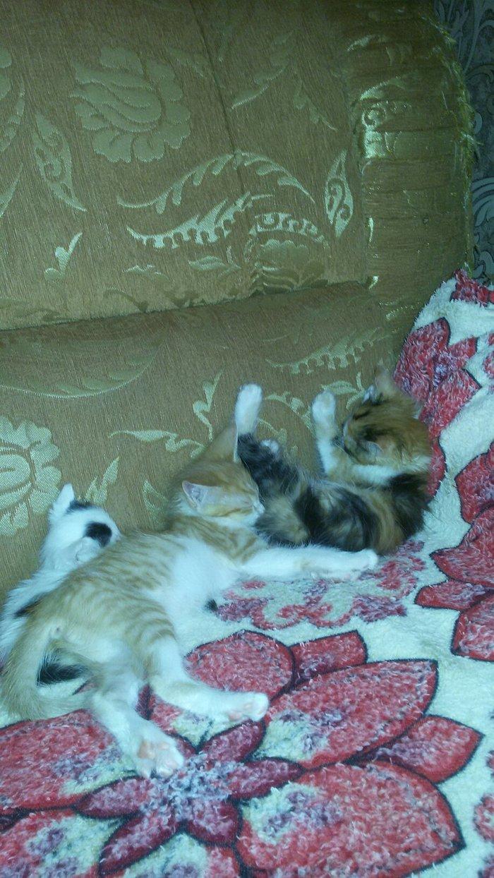Милые симпатичные котята, красивые окраски . Photo 0
