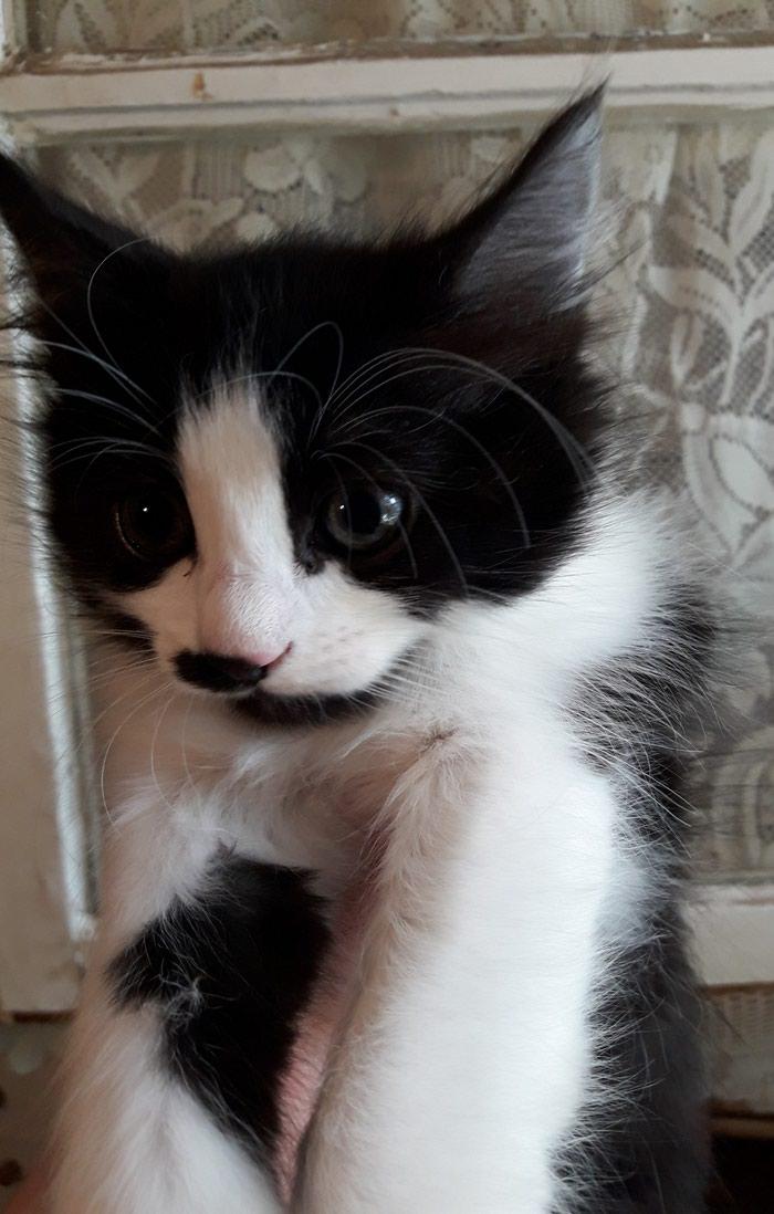 Χαριζετε μαλλιαρό γατακι θηλυκό 4 μηνών υγιέστατο εντος αττικής. Photo 4