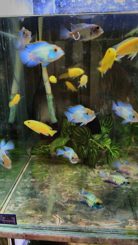 Нанокары. аквариумные рыбки в Бишкек
