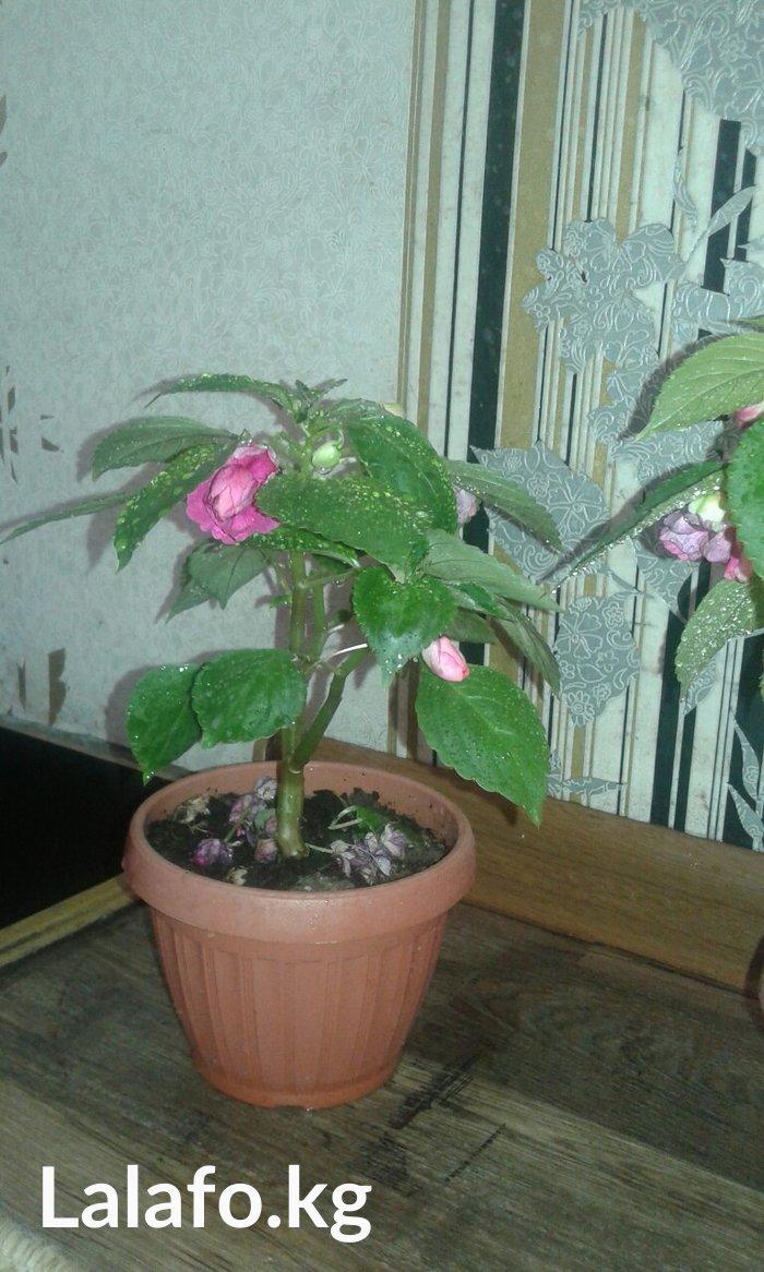 Комнатные растения. Горшки новые. в Бишкек