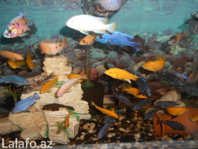 Teze duzelip akvariumlar mebel rengde ve qara rengde movcuddu . Photo 1