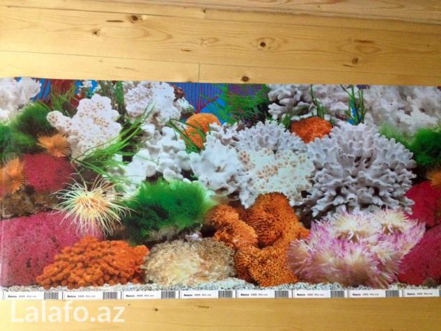 Akvarium ucun arxa fon lar . Photo 6