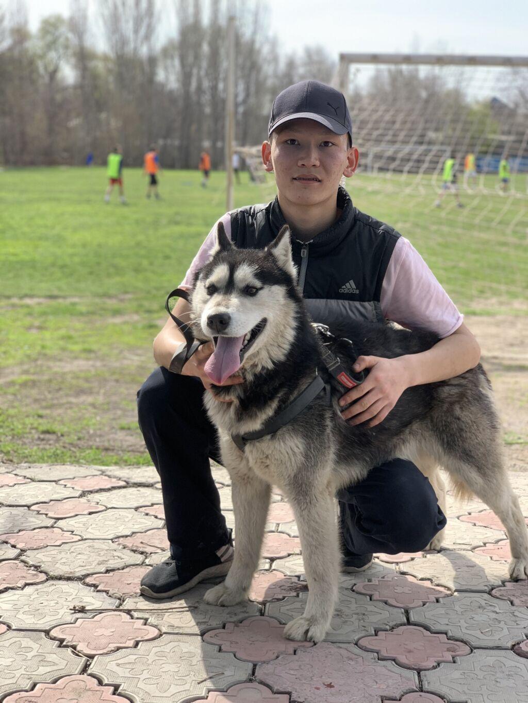 Сибирская хаски договорная: Сибирская хаски договорная