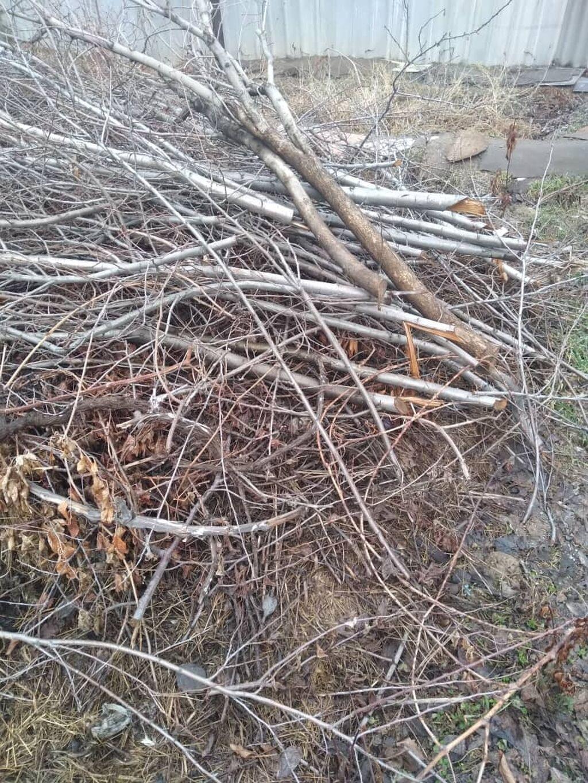 Отдам даром обрезки деревьев сливы и вишни. Село МАЕВКА (вниз по: Отдам даром обрезки деревьев сливы и вишни. Село МАЕВКА (вниз по