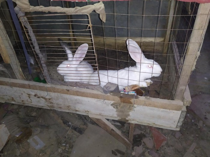 Продаю кролят. Photo 0