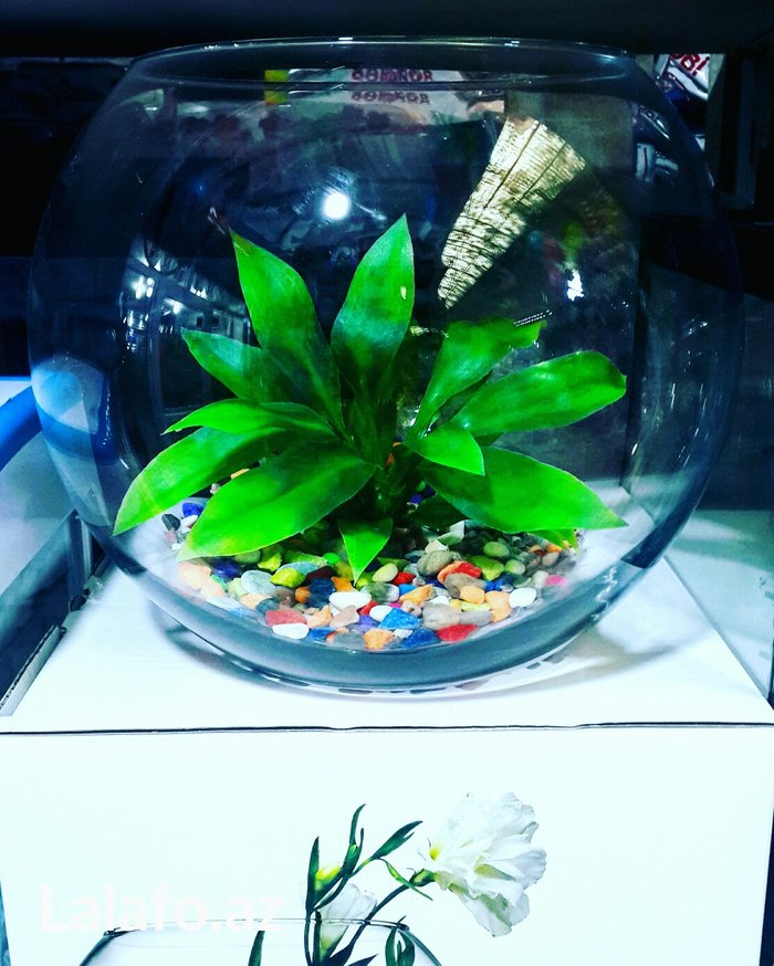 Bakı şəhərində Teze akvarium satilir. Icinin aksesuarlari ile birlikde