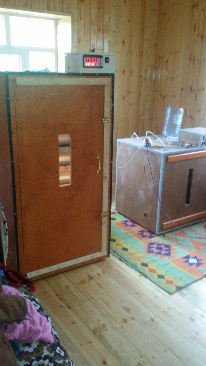 Inkubatorlarin sifarisi. tam avtomatik is rejiminde isleyir. Photo 2