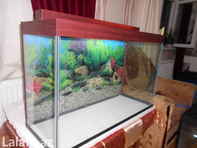 Teze akvarium 120 litrelik  whatsapp var su qiymetine qalin wuweden  . Photo 2