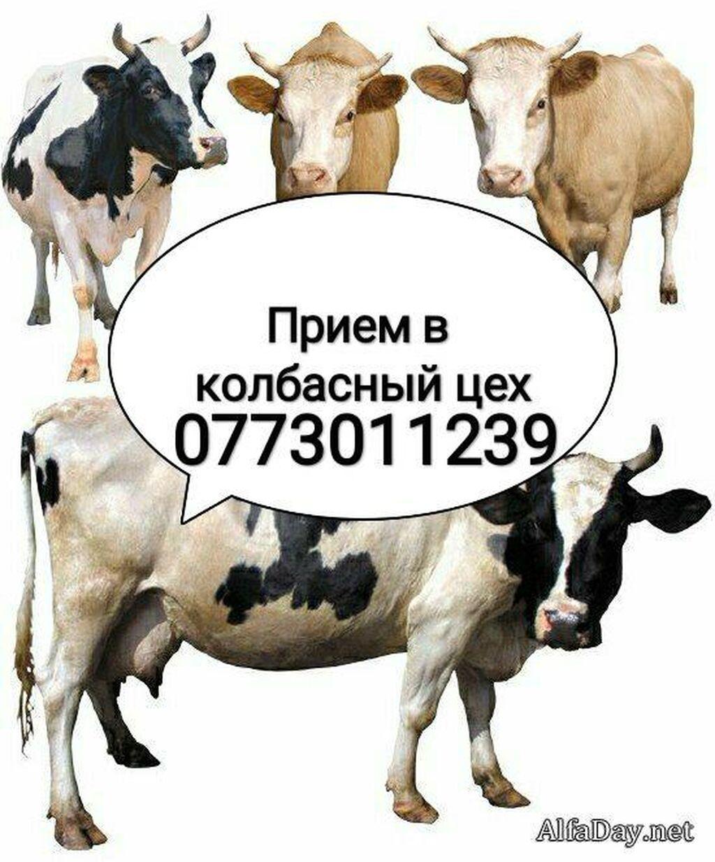 Принимаем в колбасный цех скот любой упитанности и возраста. В любое   Объявление создано 22 Октябрь 2020 06:41:11: Принимаем в колбасный цех скот любой упитанности и возраста. В любое