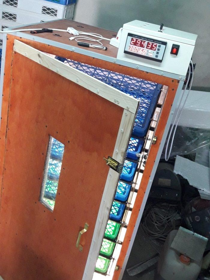 Inkubator. sifarisle yigilir. tam avtomatik is rejiminde isleyir. Photo 5