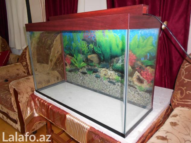 Teze akvarium 120 litrelik  whatsapp var su qiymetine qalin wuweden  . Photo 0