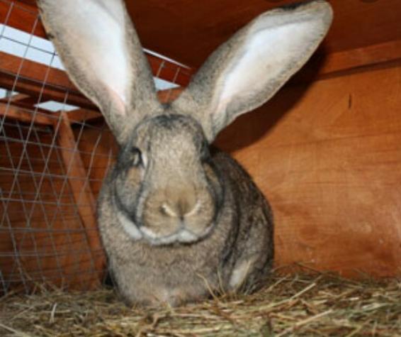 Кролики. Photo 0