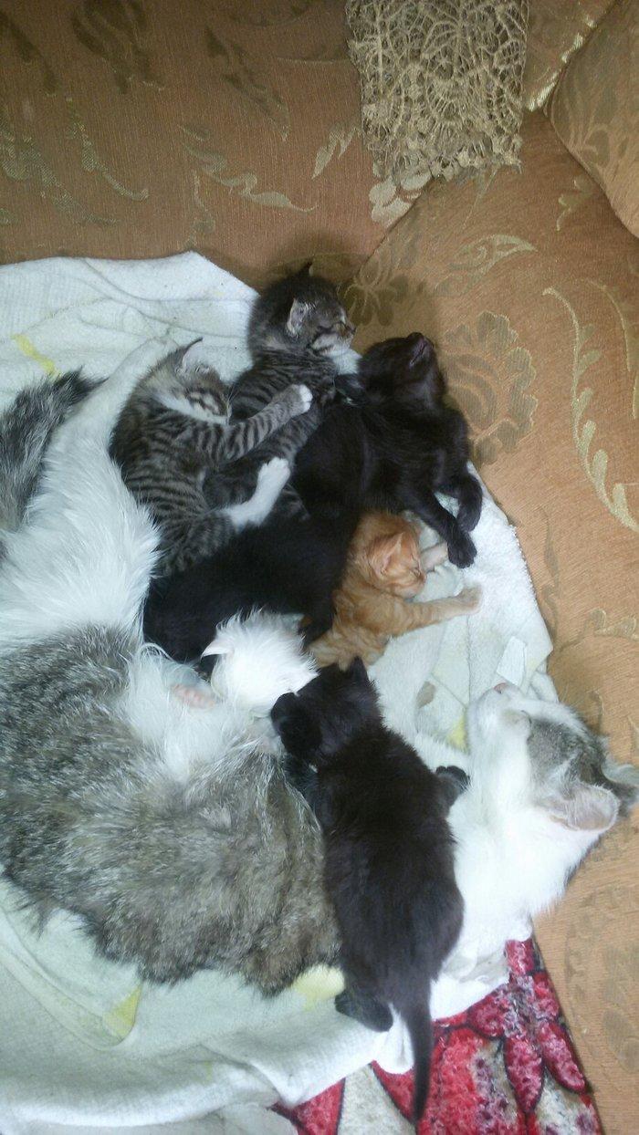 Милые симпатичные котята, красивые окраски . Photo 4