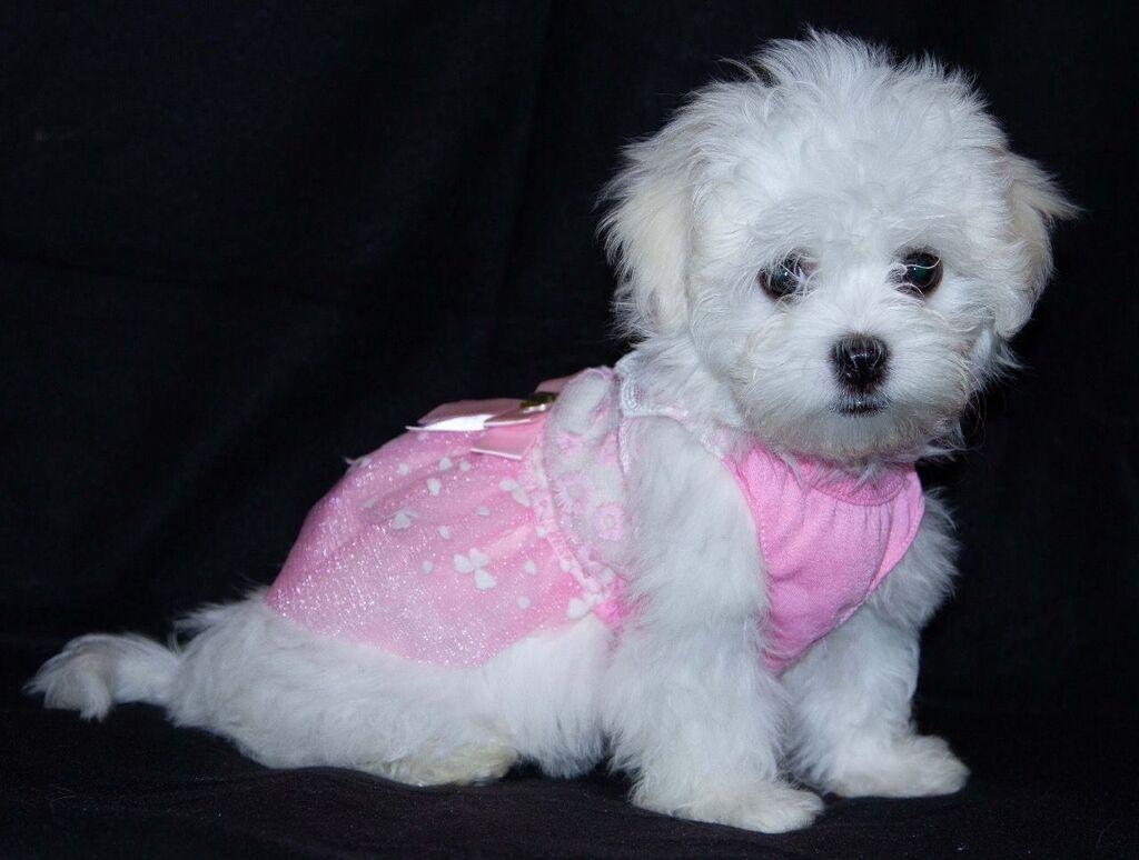 Για σκύλους - Καμένα Βούρλα: