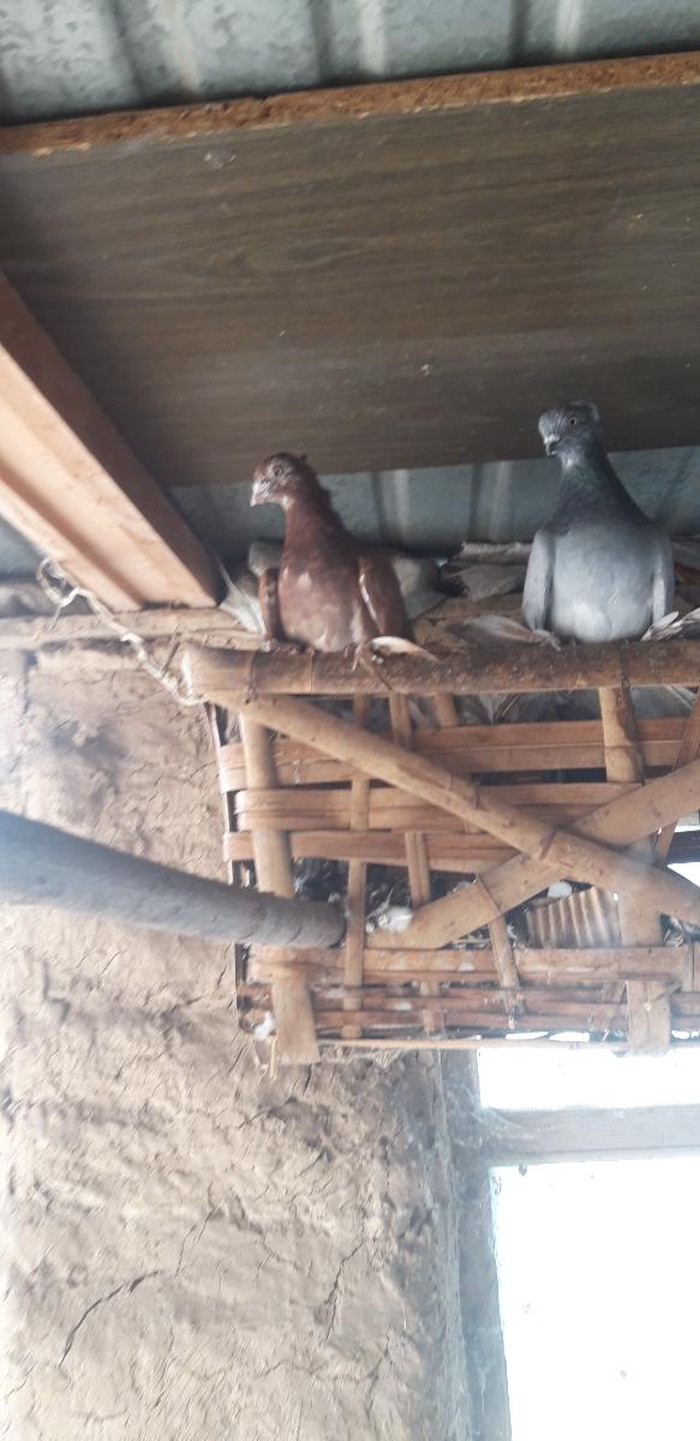 Птицы. Photo 0