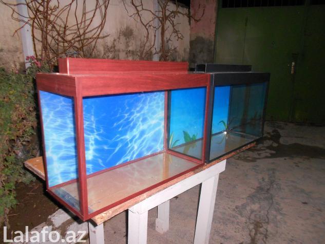 Teze duzelip akvariumlar mebel rengde ve qara rengde movcuddu . Photo 2