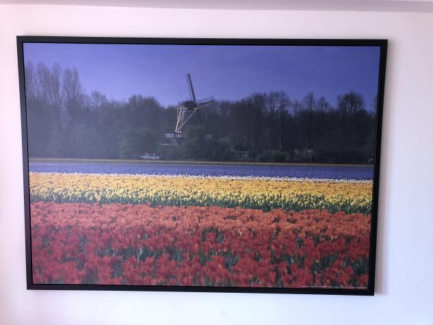 Painting of the Tulips of the Netherlands. Photo 0