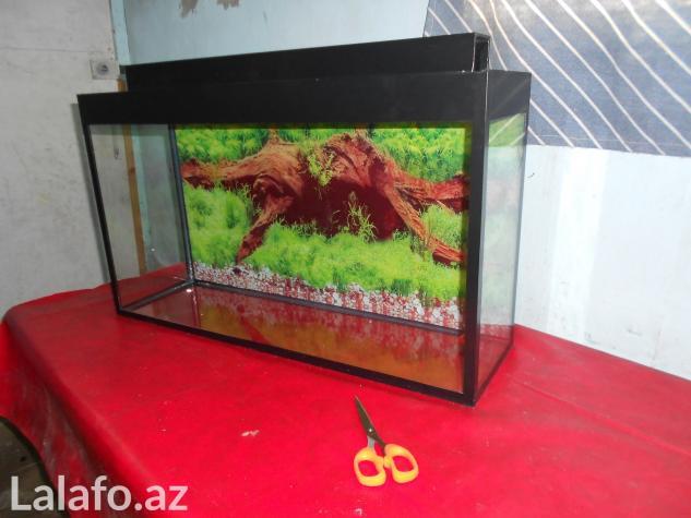 Akvarium qara ve mebel rengde . Photo 2