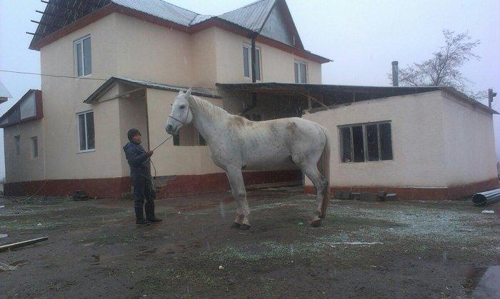 С/х животные в Балыкчах
