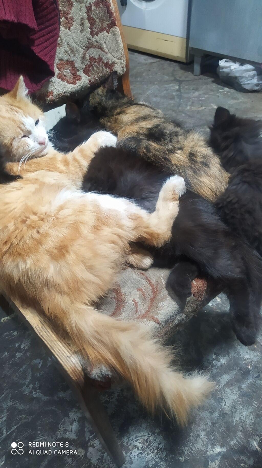 Отдам котят в добрые рукирыжие, темно серые, пушистые и   Объявление создано 13 Октябрь 2021 17:38:53   КОТЫ: Отдам котят в добрые рукирыжие, темно серые, пушистые и