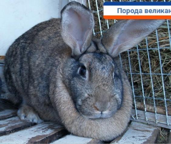 Кролики. Photo 1