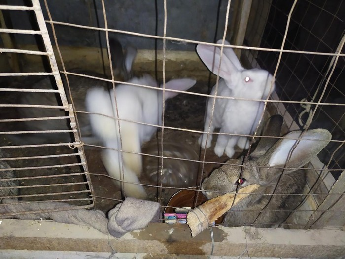 Продаю кролят. Photo 1