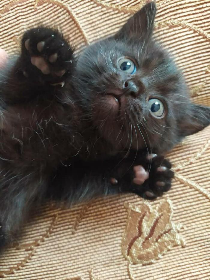 Отдам котят в добрые руки, кто хочет себе маленьких пантер?. Photo 3