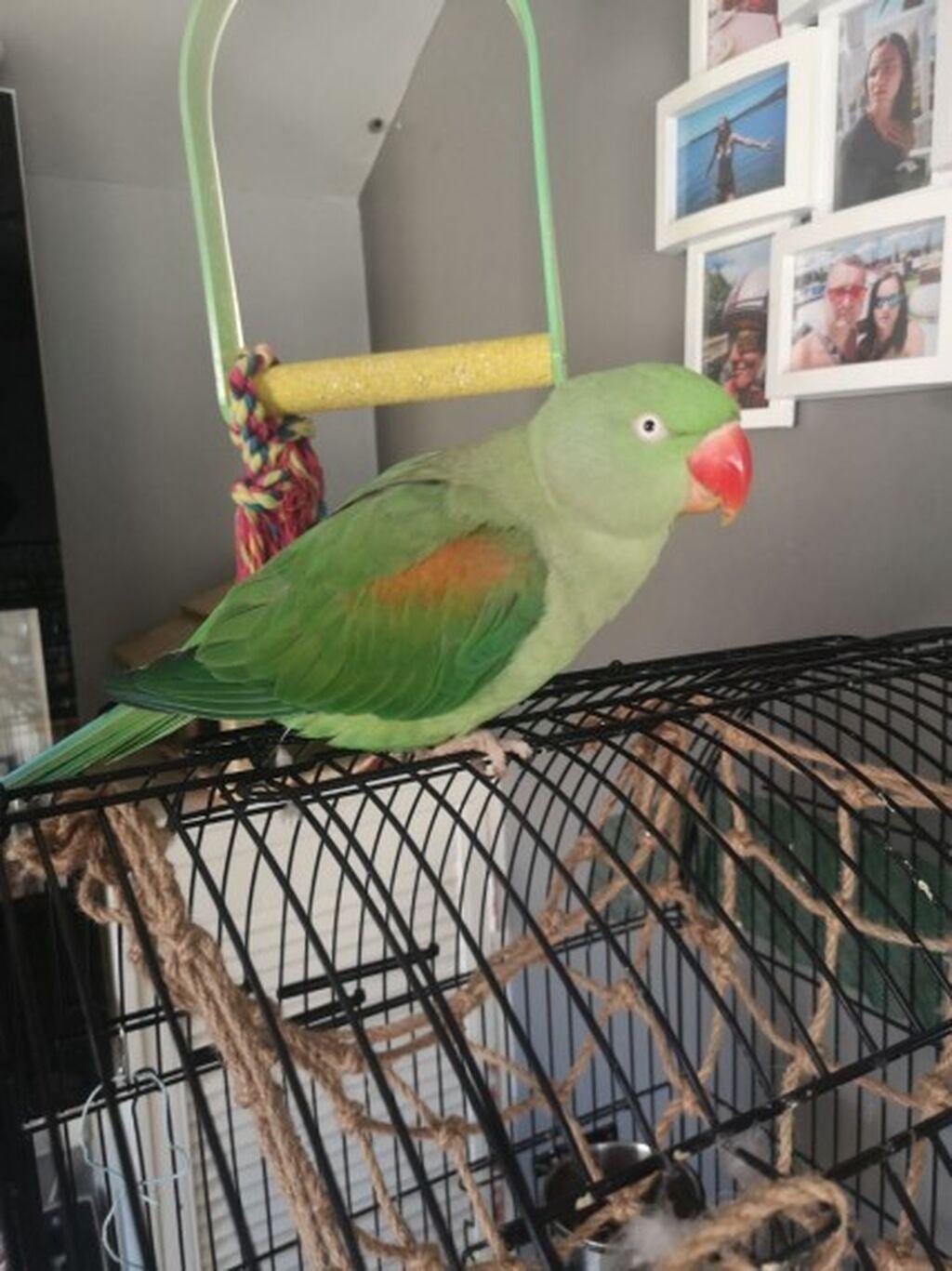 Γεια σε όλους ψάχνουμε για νέο σπίτι για τον αγαπημένο μας παπαγάλο: Γεια σε όλους ψάχνουμε για νέο σπίτι για τον αγαπημένο μας παπαγάλο,