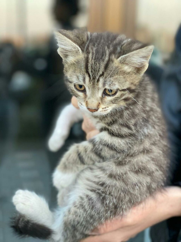 Котёнок в добрые руки  Ходит в лоток