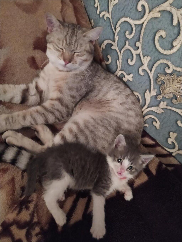 Отдам котенка девочку)) в заботливые, любящие руки