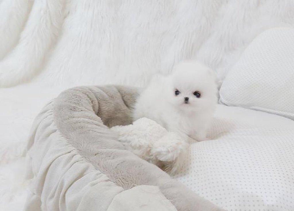 Ένα πανέμορφο νεογέννητο κουτάβι