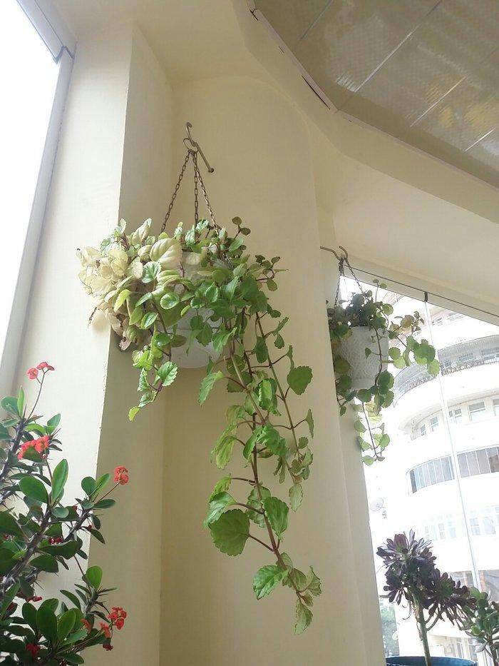 Digər otaq bitkiləri. Photo 1